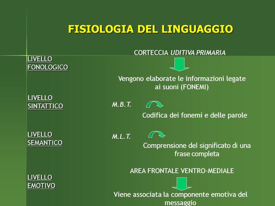 LIVELLO FONOLOGICO CORTECCIA UDITIVA PRIMARIA Vengono elaborate le informazioni legate ai suoni (FONEMI) LIVELLO SINTATTICO M.B.T.