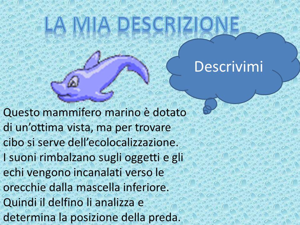 Accoppiamento Un modo di segnalare l intenzione di accoppiarsi nei delfini è il comportamento: si danno la caccia, si danno colpi con il muso e si strofinano l uno contro l altra.Talvolta riescono a formare stabili alleanze maschili cooperando per conquistare una femmina.