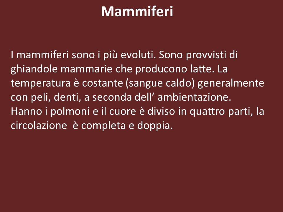 Mammiferi I mammiferi sono i più evoluti. Sono provvisti di ghiandole mammarie che producono latte. La temperatura è costante (sangue caldo) generalme
