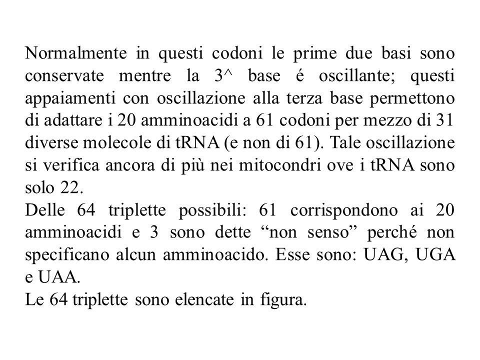 Normalmente in questi codoni le prime due basi sono conservate mentre la 3^ base é oscillante; questi appaiamenti con oscillazione alla terza base permettono di adattare i 20 amminoacidi a 61 codoni per mezzo di 31 diverse molecole di tRNA (e non di 61).