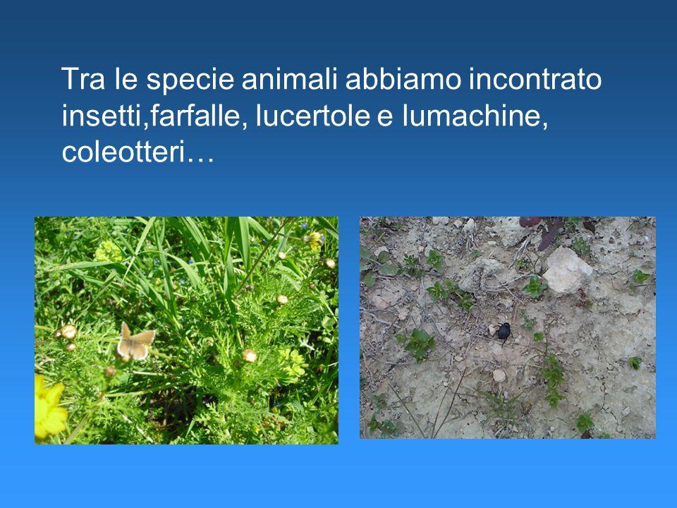 Tra le specie animali abbiamo incontrato insetti,farfalle, lucertole e lumachine, coleotteri…