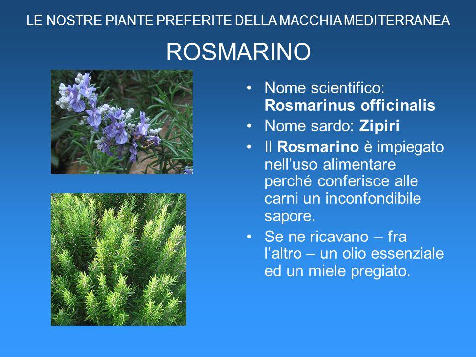 ROSMARINO Nome scientifico: Rosmarinus officinalis Nome sardo: Zipiri Il Rosmarino è impiegato nelluso alimentare perché conferisce alle carni un inco