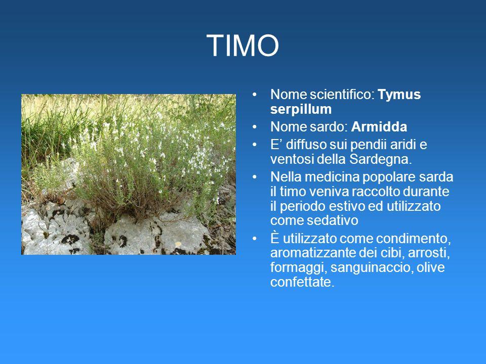 TIMO Nome scientifico: Tymus serpillum Nome sardo: Armidda E diffuso sui pendii aridi e ventosi della Sardegna. Nella medicina popolare sarda il timo