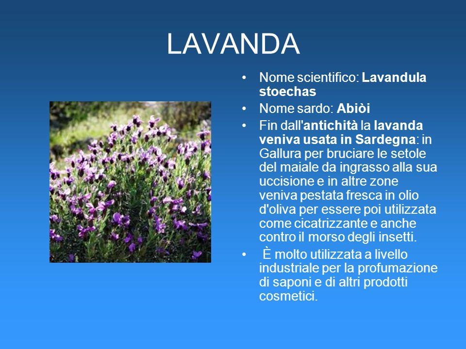 LAVANDA Nome scientifico: Lavandula stoechas Nome sardo: Abiòi Fin dall'antichità la lavanda veniva usata in Sardegna: in Gallura per bruciare le seto