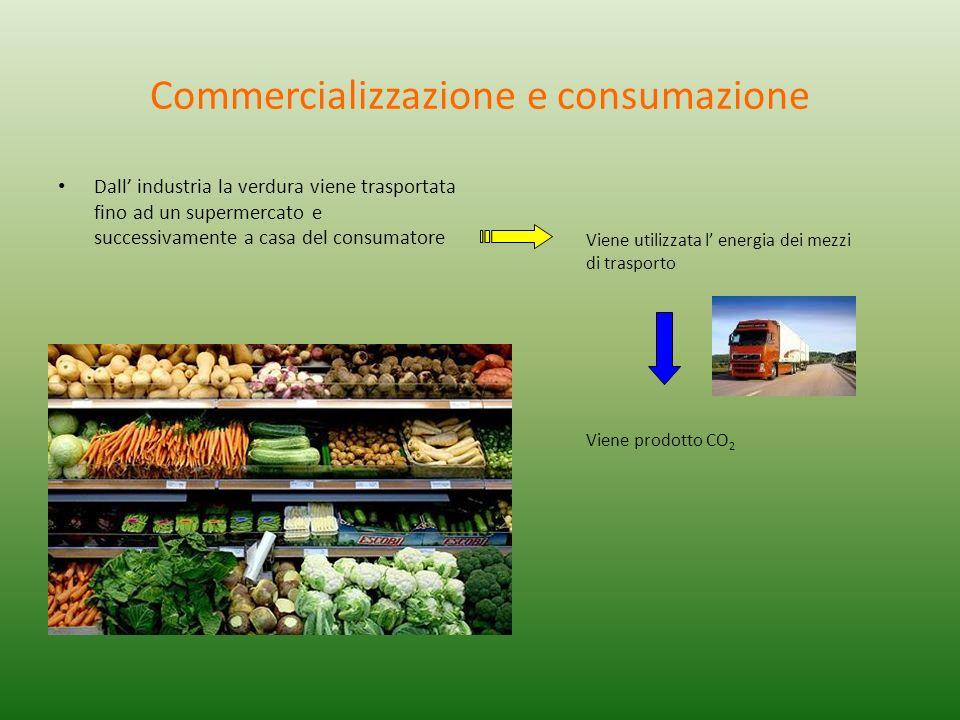 Commercializzazione e consumazione Dall industria la verdura viene trasportata fino ad un supermercato e successivamente a casa del consumatore Viene