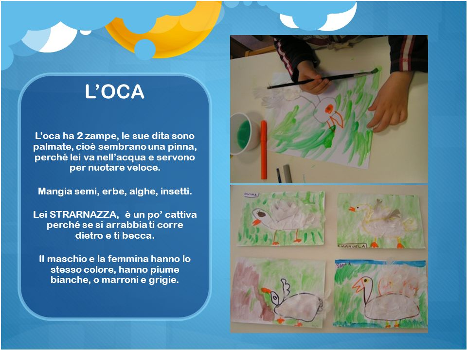 LOCA Loca ha 2 zampe, le sue dita sono palmate, cioè sembrano una pinna, perché lei va nellacqua e servono per nuotare veloce. Mangia semi, erbe, algh