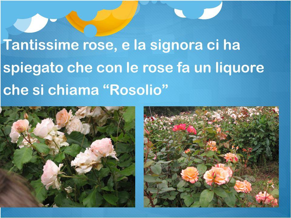 Tantissime rose, e la signora ci ha spiegato che con le rose fa un liquore che si chiama Rosolio