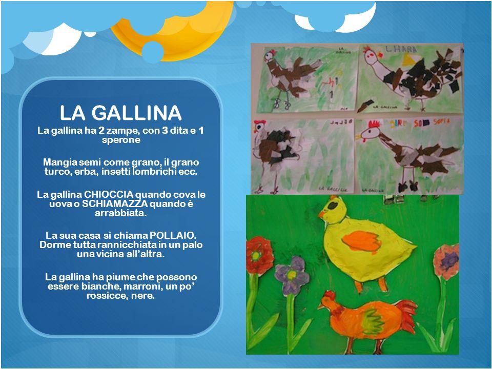 LA GALLINA La gallina ha 2 zampe, con 3 dita e 1 sperone Mangia semi come grano, il grano turco, erba, insetti lombrichi ecc. La gallina CHIOCCIA quan
