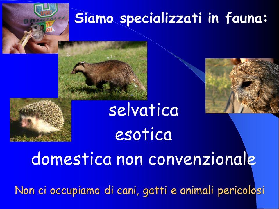 Non ci occupiamo di cani, gatti e animali pericolosi selvatica esotica domestica non convenzionale Siamo specializzati in fauna: