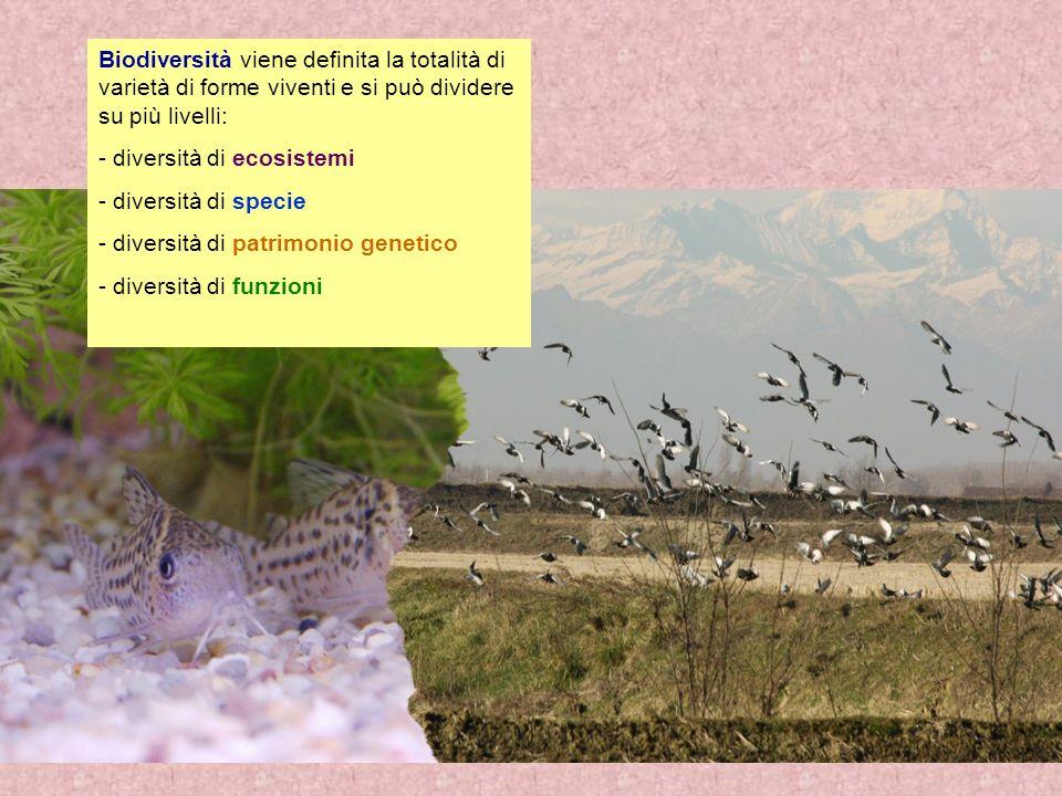 Biodiversità viene definita la totalità di varietà di forme viventi e si può dividere su più livelli: - diversità di ecosistemi - diversità di specie - diversità di patrimonio genetico - diversità di funzioni