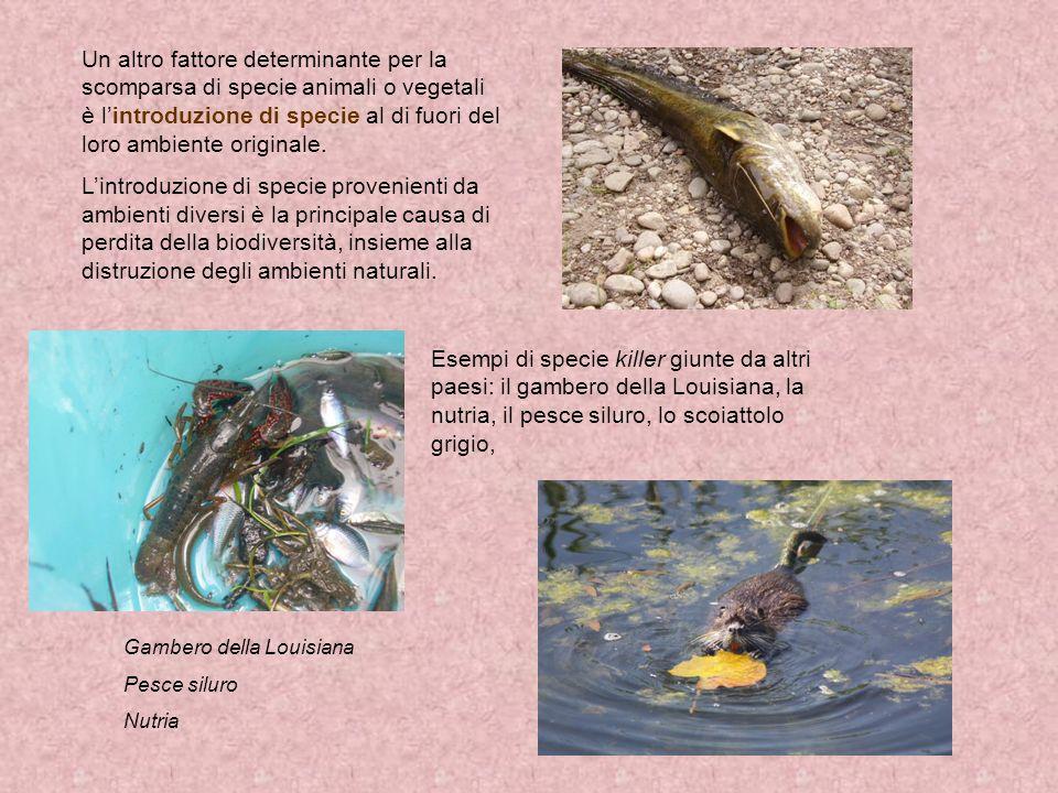 Il regno degli animali che comprende organismi eucarioti pluricellulari eterotrofi che si nutrono di alimenti provenienti da altri esseri viventi.