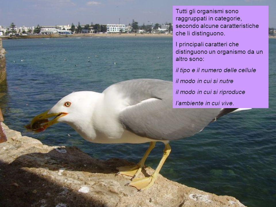 Tutti gli organismi sono raggruppati in categorie, secondo alcune caratteristiche che li distinguono.