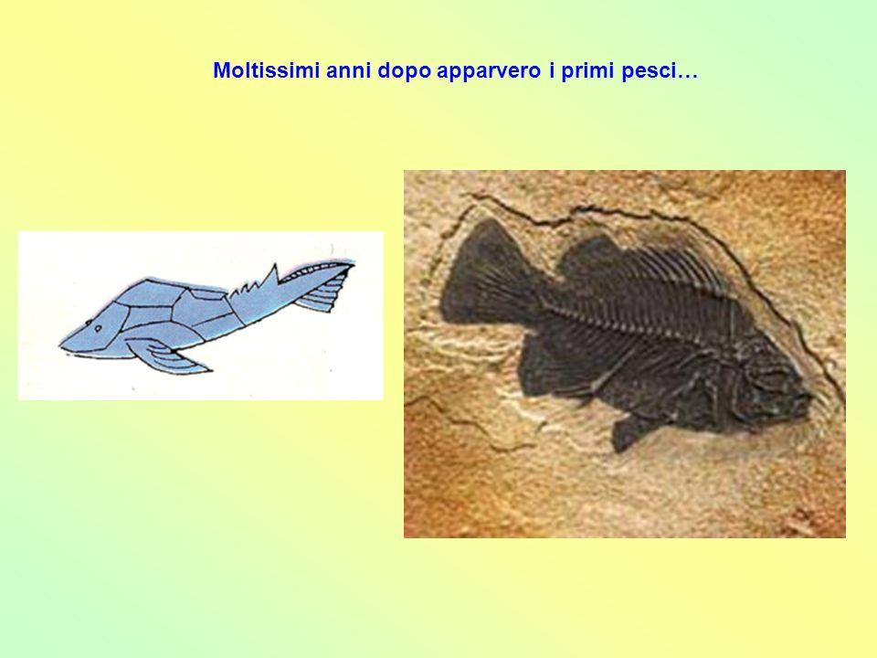 Dopo altri secoli, alcuni animali marini, uscendo dallacqua, si adattarono allambiente terrestre: erano gli anfibi (quattro zampe e coda di pesce).