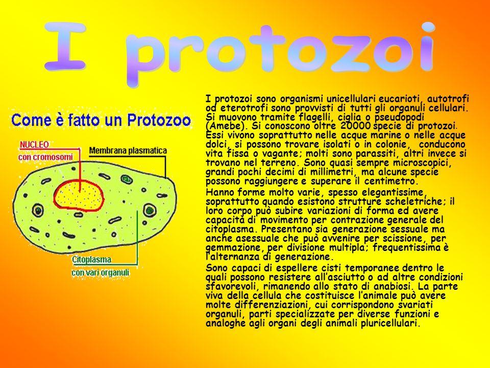 I protozoi sono organismi unicellulari eucarioti, autotrofi od eterotrofi sono provvisti di tutti gli organuli cellulari. Si muovono tramite flagelli,