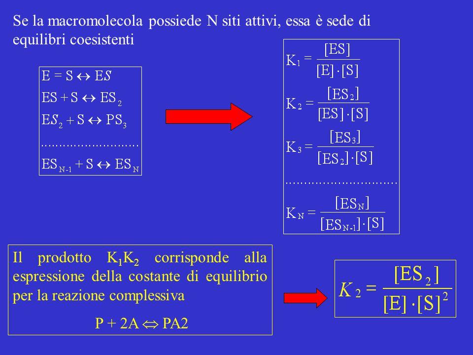 Se la macromolecola possiede N siti attivi, essa è sede di equilibri coesistenti Il prodotto K 1 K 2 corrisponde alla espressione della costante di equilibrio per la reazione complessiva P + 2A PA2