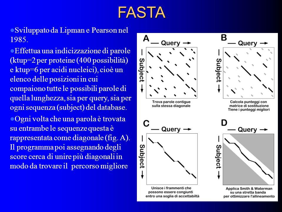 FASTA Sviluppato da Lipman e Pearson nel 1985. Effettua una indicizzazione di parole (ktup=2 per proteine (400 possibilità) e ktup=6 per acidi nucleic