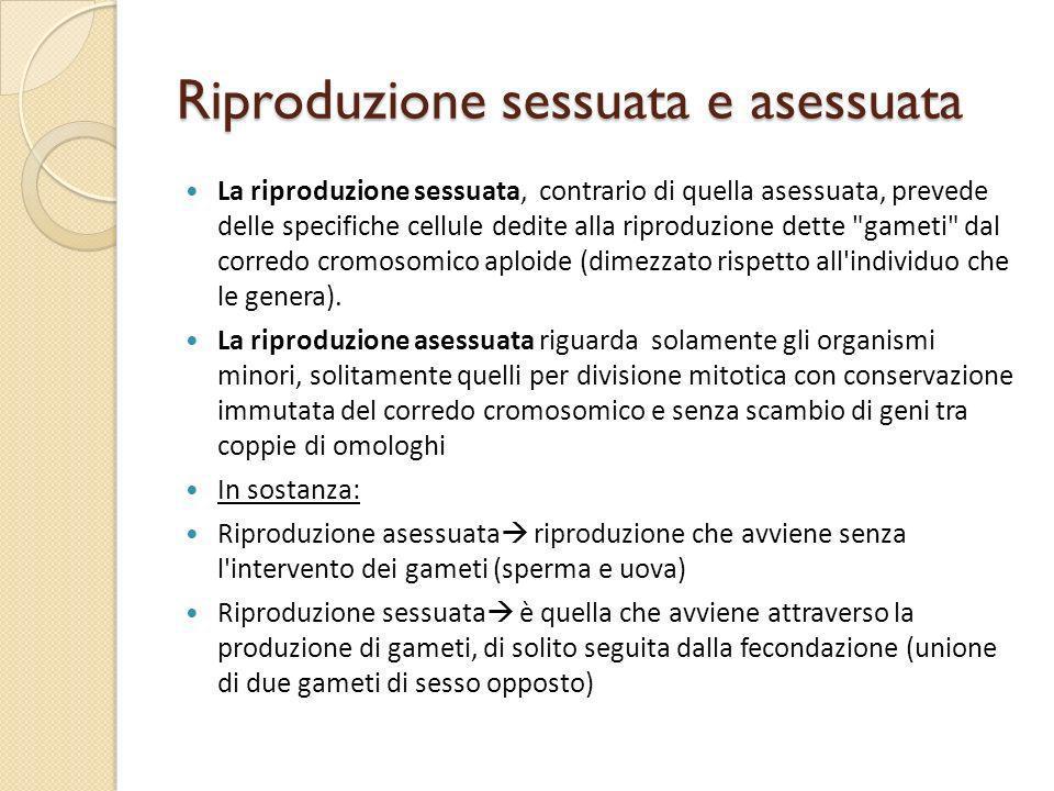 Riproduzione sessuata e asessuata La riproduzione sessuata, contrario di quella asessuata, prevede delle specifiche cellule dedite alla riproduzione d