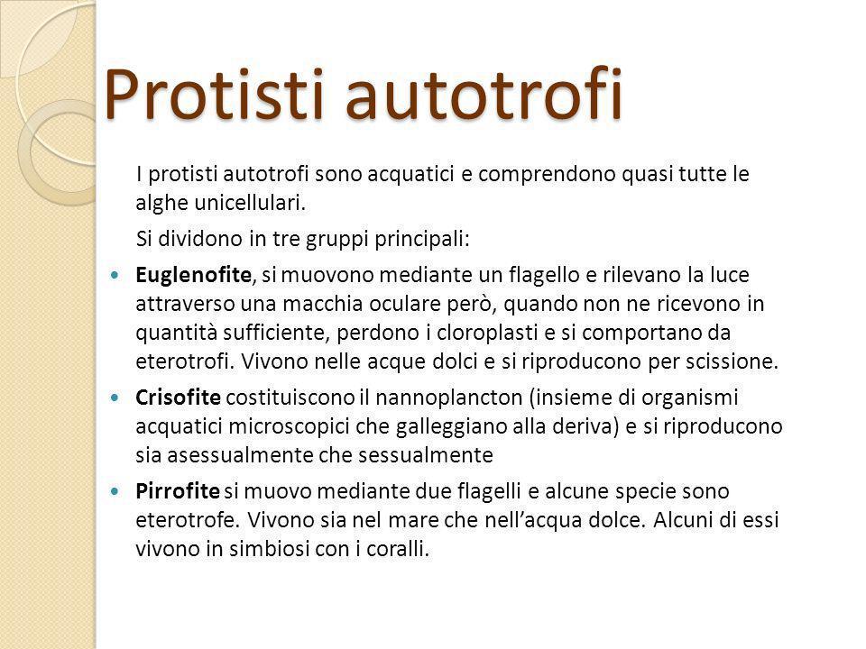 Protisti autotrofi I protisti autotrofi sono acquatici e comprendono quasi tutte le alghe unicellulari. Si dividono in tre gruppi principali: Euglenof