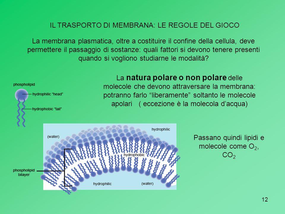 12 IL TRASPORTO DI MEMBRANA: LE REGOLE DEL GIOCO La membrana plasmatica, oltre a costituire il confine della cellula, deve permettere il passaggio di