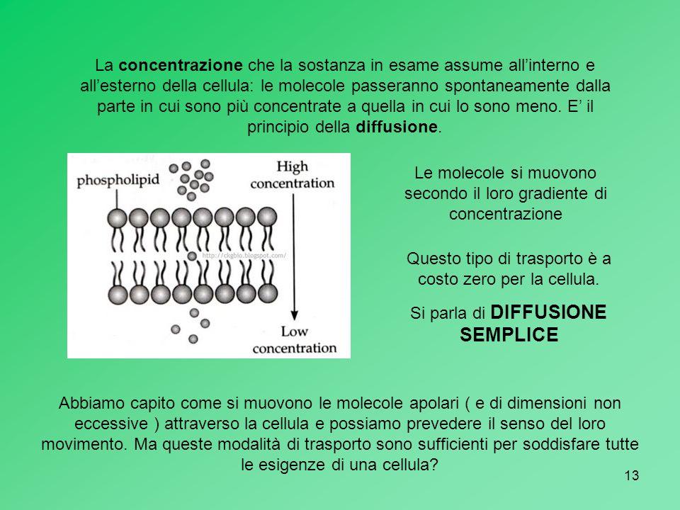 13 La concentrazione che la sostanza in esame assume allinterno e allesterno della cellula: le molecole passeranno spontaneamente dalla parte in cui s
