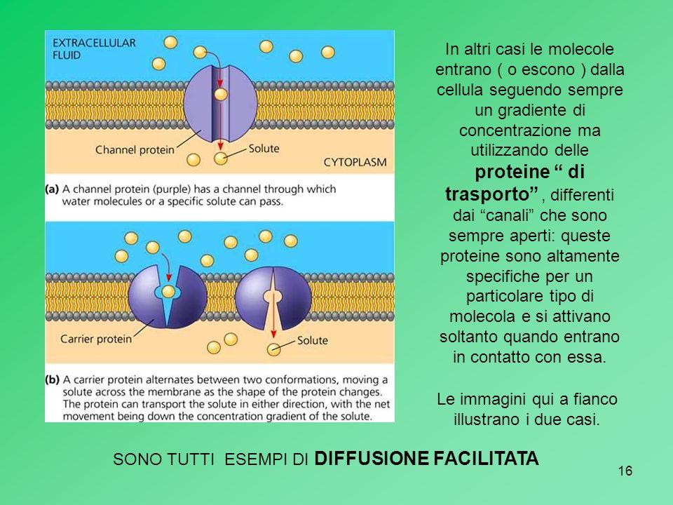 16 In altri casi le molecole entrano ( o escono ) dalla cellula seguendo sempre un gradiente di concentrazione ma utilizzando delle proteine di traspo