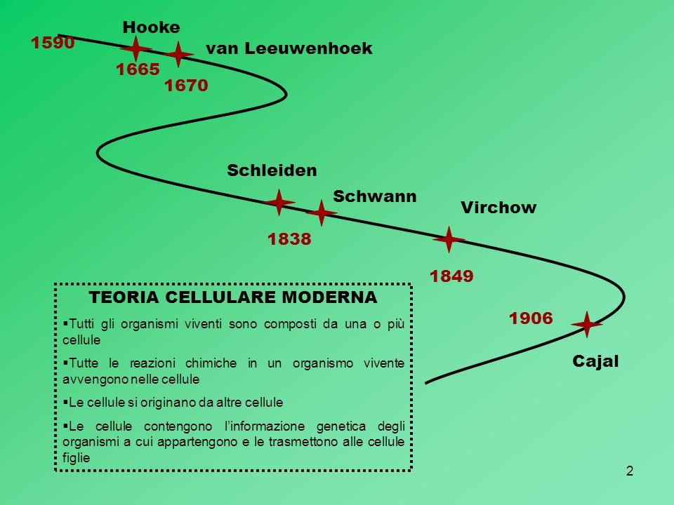 2 1590 Hooke 1665 1670 van Leeuwenhoek TEORIA CELLULARE MODERNA Tutti gli organismi viventi sono composti da una o più cellule Tutte le reazioni chimi