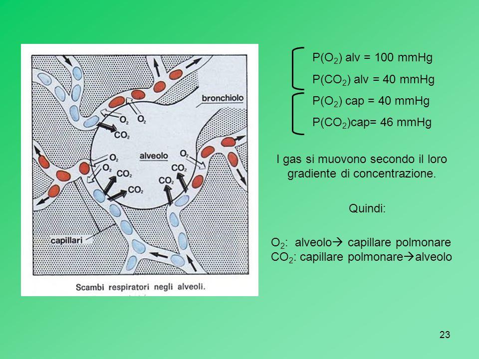 23 P(O 2 ) alv = 100 mmHg P(CO 2 ) alv = 40 mmHg P(O 2 ) cap = 40 mmHg P(CO 2 )cap= 46 mmHg I gas si muovono secondo il loro gradiente di concentrazio