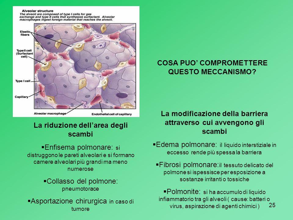 25 COSA PUO COMPROMETTERE QUESTO MECCANISMO? La riduzione dellarea degli scambi Enfisema polmonare: si distruggono le pareti alveolari e si formano ca