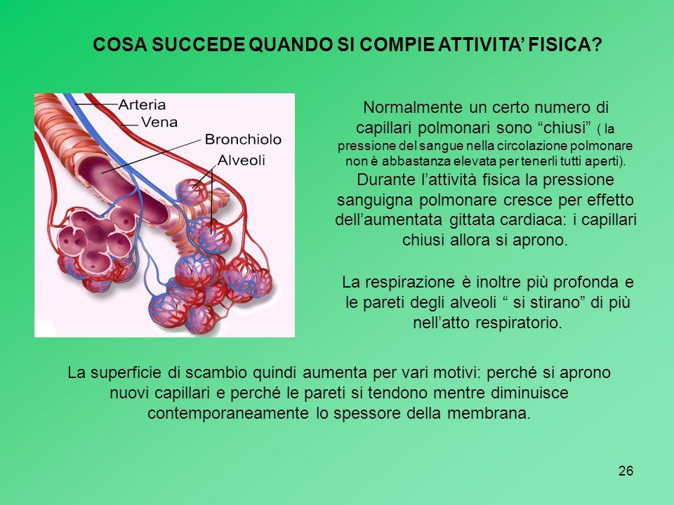 26 COSA SUCCEDE QUANDO SI COMPIE ATTIVITA FISICA? Normalmente un certo numero di capillari polmonari sono chiusi ( la pressione del sangue nella circo