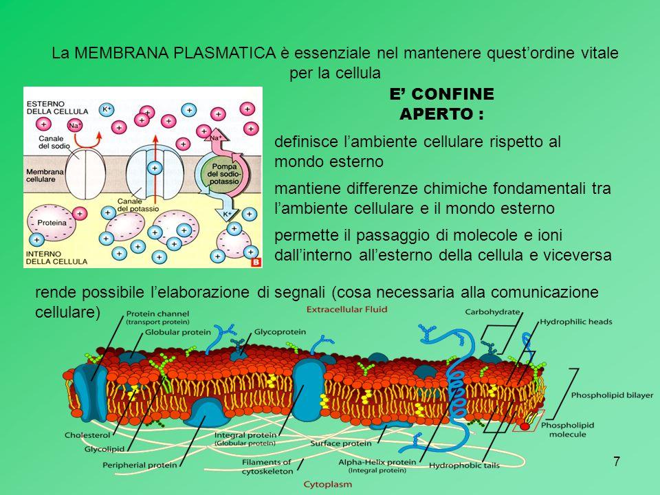 7 La MEMBRANA PLASMATICA è essenziale nel mantenere questordine vitale per la cellula E CONFINE APERTO : definisce lambiente cellulare rispetto al mon