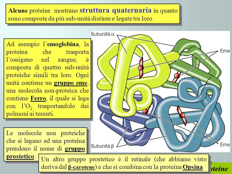 Proteine Alcune proteine mostrano struttura quaternaria in quanto sono composte da più sub-unità distinte e legate tra loro Ad esempio lemoglobina, la