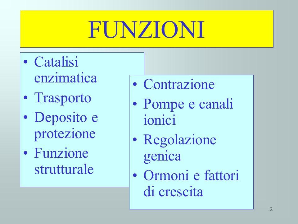 FUNZIONI Catalisi enzimatica Trasporto Deposito e protezione Funzione strutturale Contrazione Pompe e canali ionici Regolazione genica Ormoni e fattor