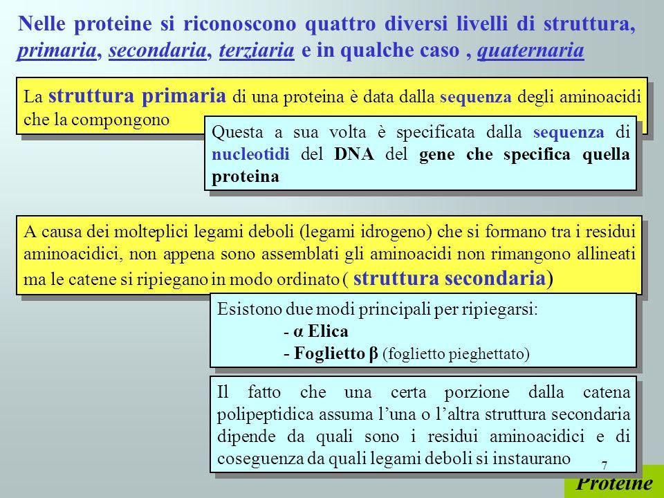 Proteine La struttura primaria di una proteina è data dalla sequenza degli aminoacidi che la compongono Nelle proteine si riconoscono quattro diversi