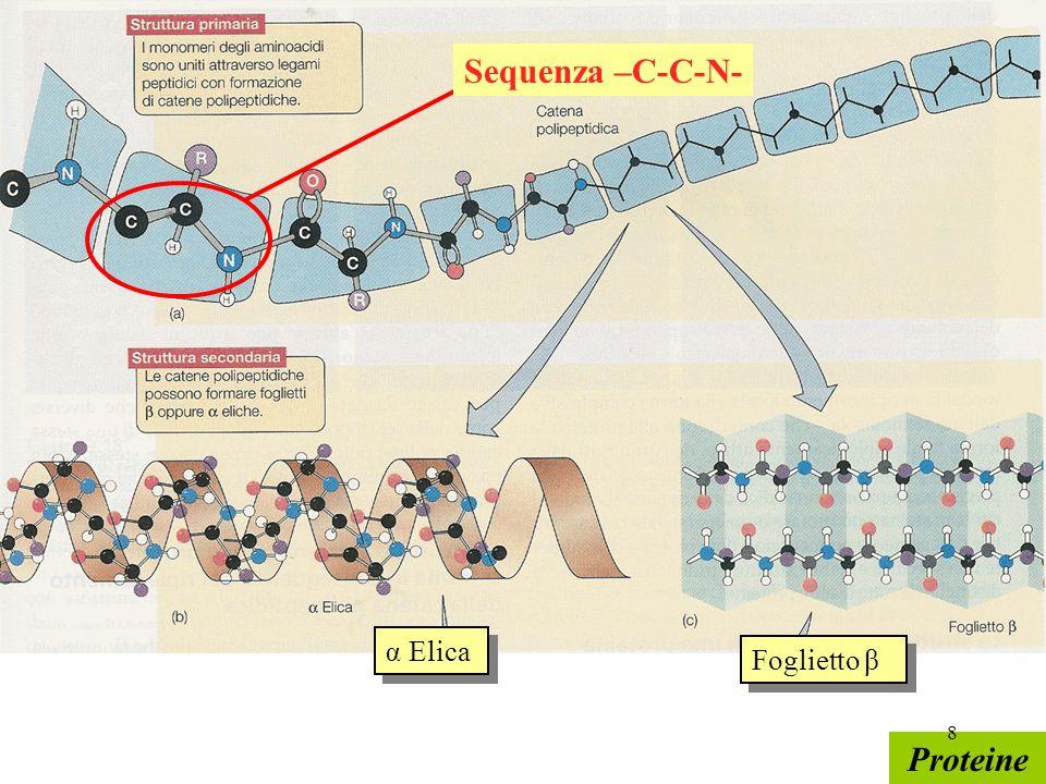 Proteine Sequenza –C-C-N- Foglietto β α Elica 8
