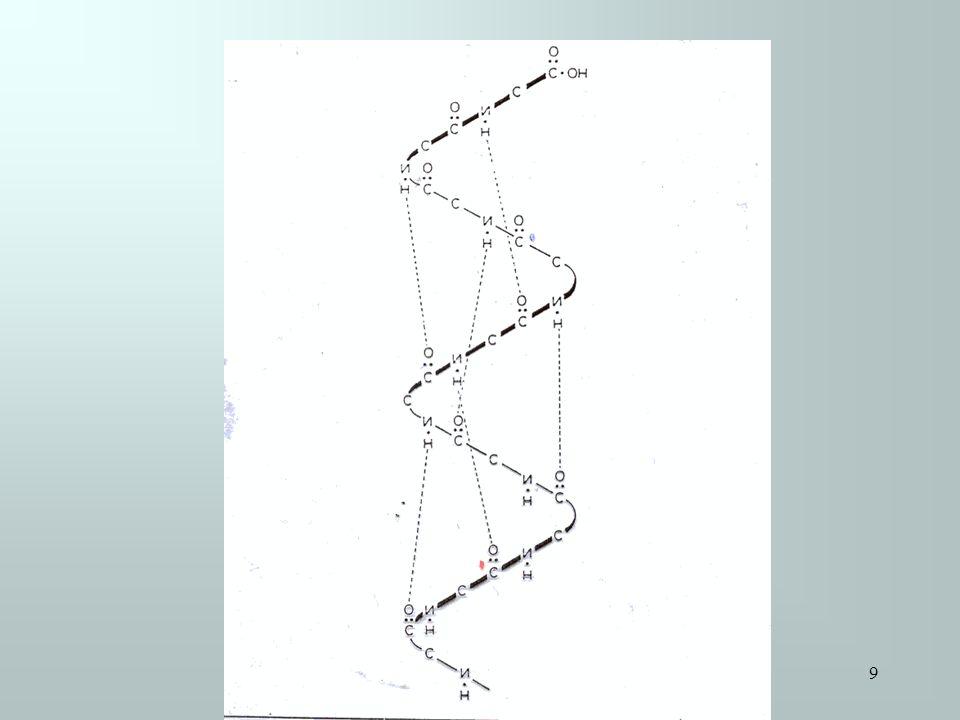 Proteine Foglietto β α Elica Nella maggior parte delle proteine le catene di aminoacidi (siano esse organizzati ad α Elica che Foglietto β) si ripiegano a gomito dando così alla proteina una una forma globulare Il ripiegamento è causato: 1)Dalla formazione di legami deboli (legami idrogeno) 2)Dalla tendenza dei diversi residui aminoacidici a portarsi verso lesterno (ambiente polare) o verso lesterno (ambiente apolare) 3)Dalla formazione di legami covalenti Il ripiegamento è causato: 1)Dalla formazione di legami deboli (legami idrogeno) 2)Dalla tendenza dei diversi residui aminoacidici a portarsi verso lesterno (ambiente polare) o verso lesterno (ambiente apolare) 3)Dalla formazione di legami covalenti Struttura terziaria In particolare tra due molecole dellaminoacido cisteina si può formare un ponte disolfuro 10