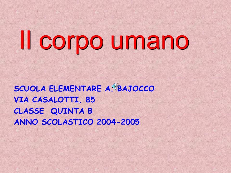 Il corpo umano SCUOLA ELEMENTARE A. BAJOCCO VIA CASALOTTI, 85 CLASSE QUINTA B ANNO SCOLASTICO 2004-2005