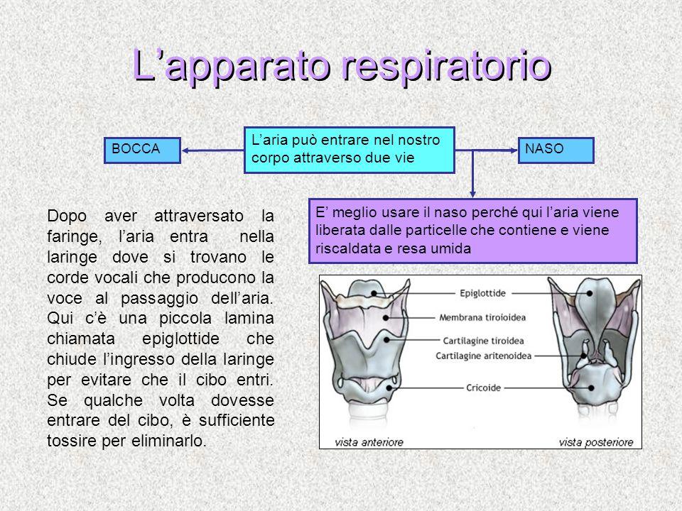 Lapparato respiratorio Laria può entrare nel nostro corpo attraverso due vie BOCCANASO E meglio usare il naso perché qui laria viene liberata dalle pa