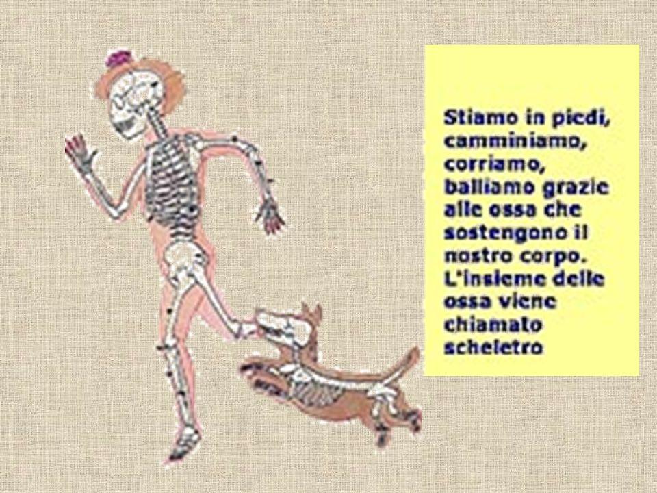 I MUSCOLI I muscoli sono le strutture che si trovano sotto la pelle e che permettono tutti i movimenti del corpo.