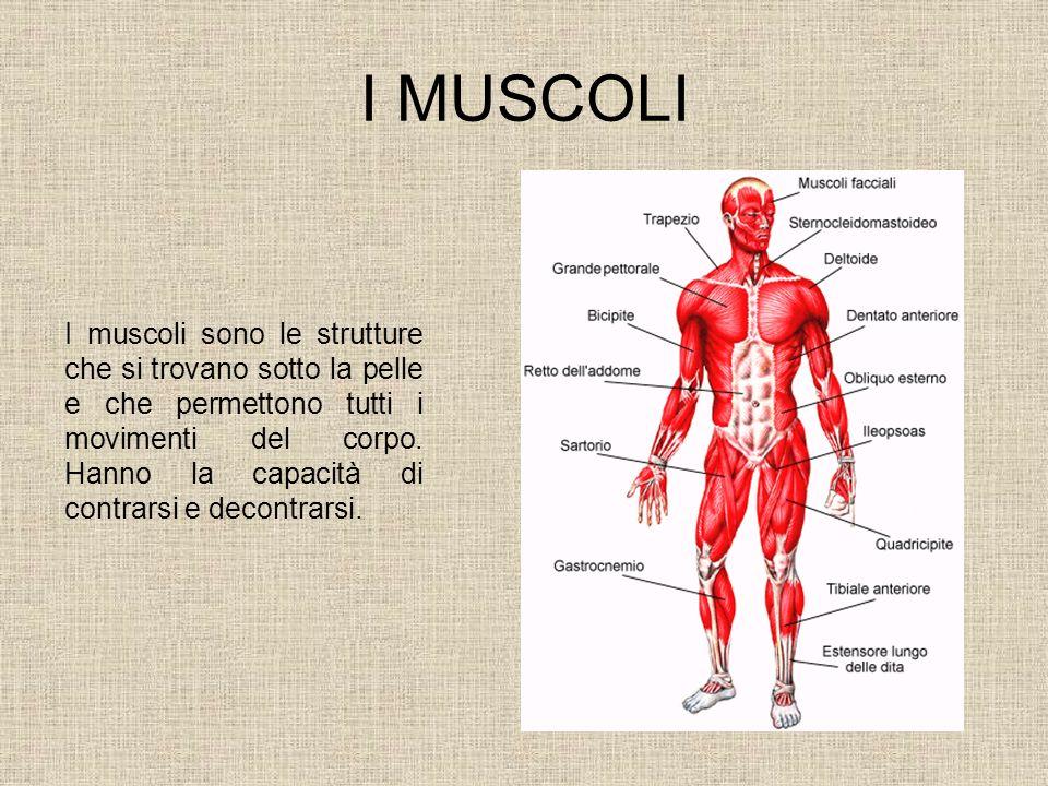 I MUSCOLI I muscoli sono le strutture che si trovano sotto la pelle e che permettono tutti i movimenti del corpo. Hanno la capacità di contrarsi e dec