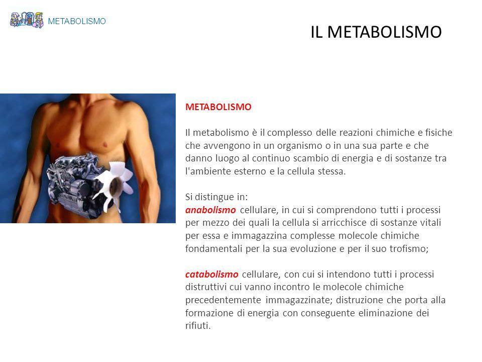 Il metabolismo è il complesso delle reazioni chimiche e fisiche che avvengono in un organismo o in una sua parte e che danno luogo al continuo scambio