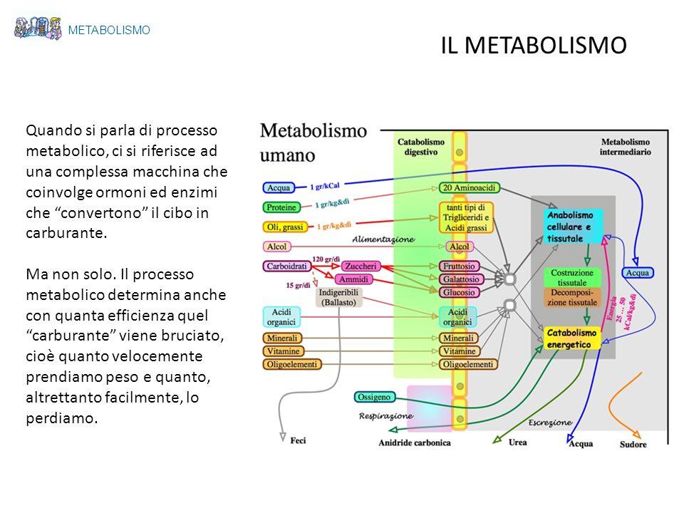 METABOLISMO IL METABOLISMO Quando si parla di processo metabolico, ci si riferisce ad una complessa macchina che coinvolge ormoni ed enzimi che conver