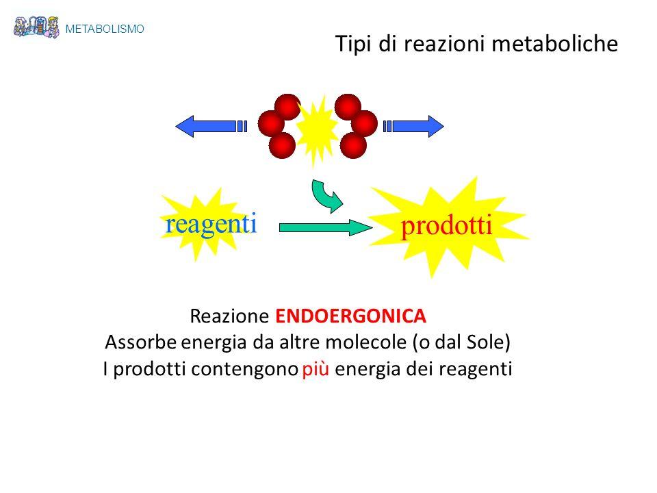 Tipi di reazioni metaboliche reagenti prodotti Reazione ENDOERGONICA Assorbe energia da altre molecole (o dal Sole) I prodotti contengono più energia