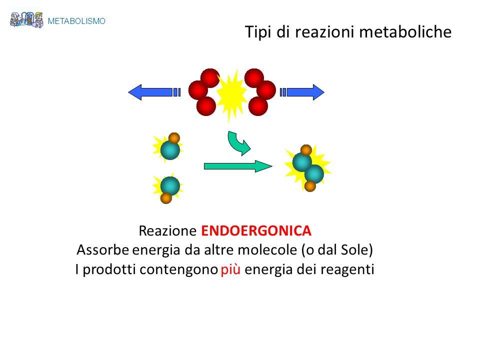 Reazione ENDOERGONICA Assorbe energia da altre molecole (o dal Sole) I prodotti contengono più energia dei reagenti METABOLISMO Tipi di reazioni metab