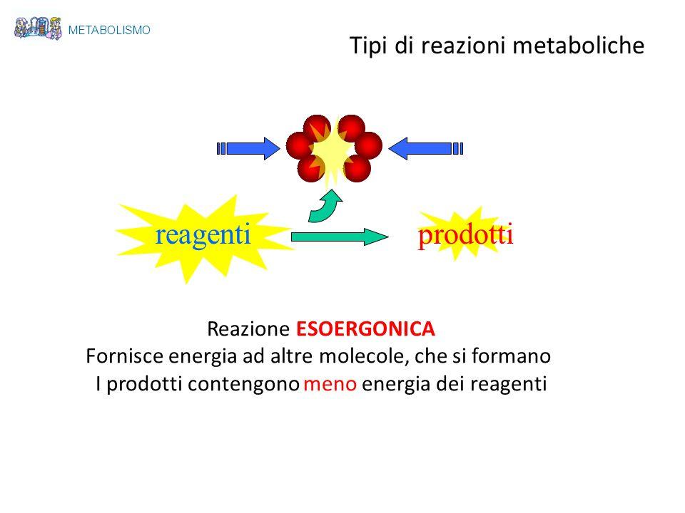reagentiprodotti Reazione ESOERGONICA Fornisce energia ad altre molecole, che si formano I prodotti contengono meno energia dei reagenti METABOLISMO T