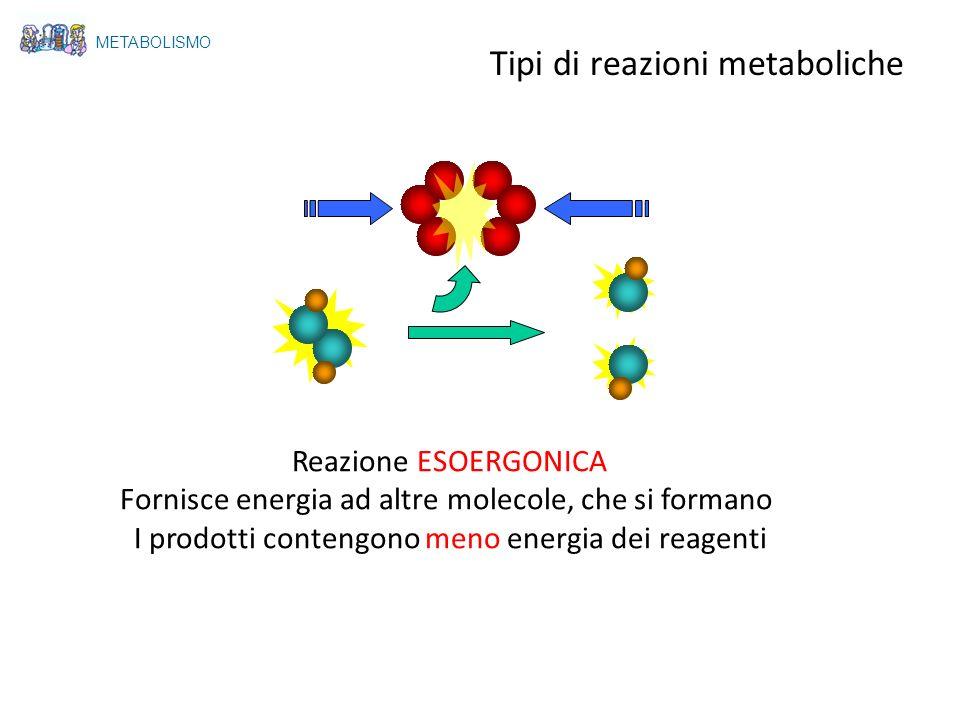 Reazione ESOERGONICA Fornisce energia ad altre molecole, che si formano I prodotti contengono meno energia dei reagenti METABOLISMO Tipi di reazioni m