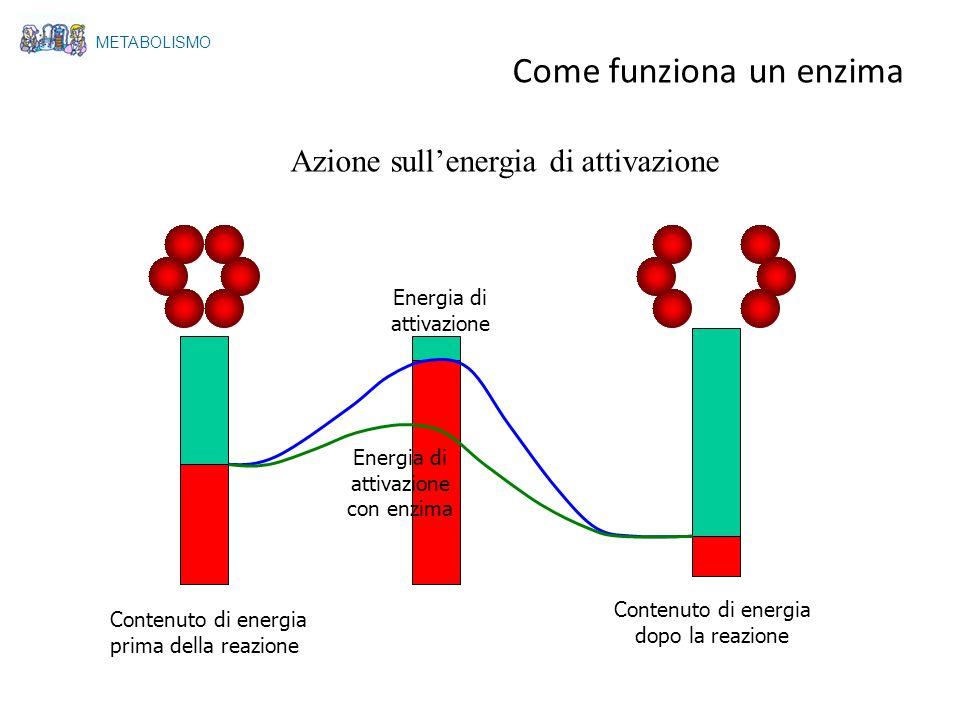 Azione sullenergia di attivazione Contenuto di energia prima della reazione Contenuto di energia dopo la reazione Energia di attivazione Energia di at