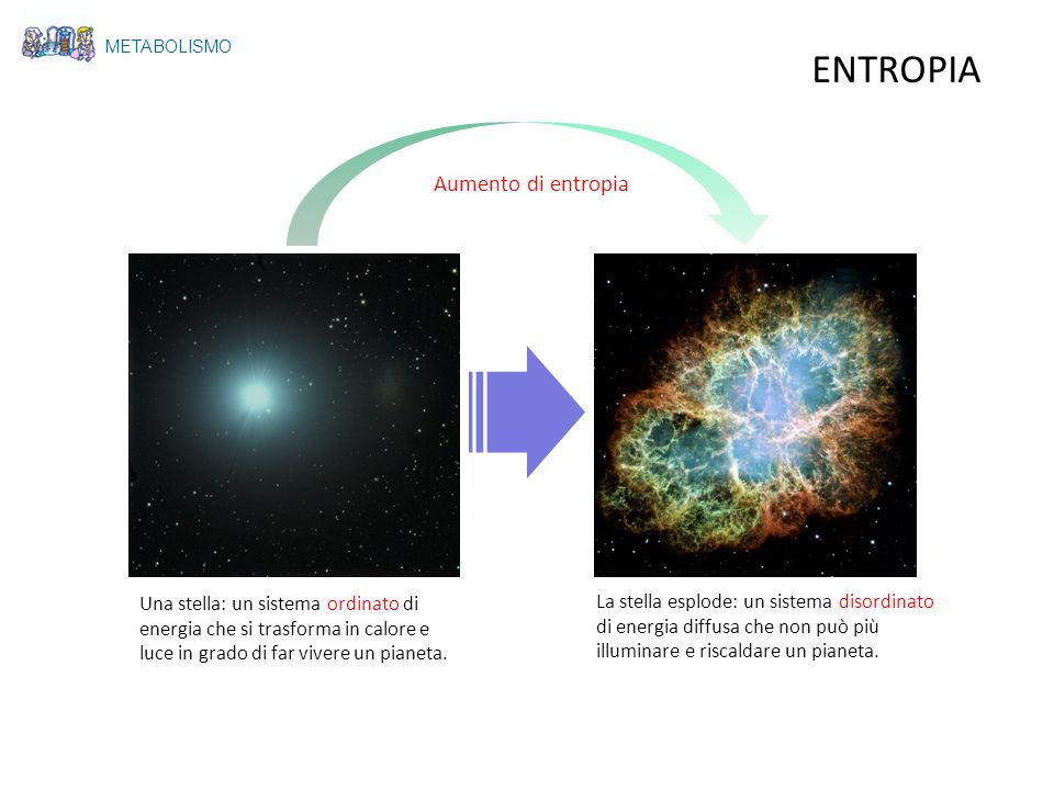 METABOLISMO ENTROPIA Una stella: un sistema ordinato di energia che si trasforma in calore e luce in grado di far vivere un pianeta. La stella esplode