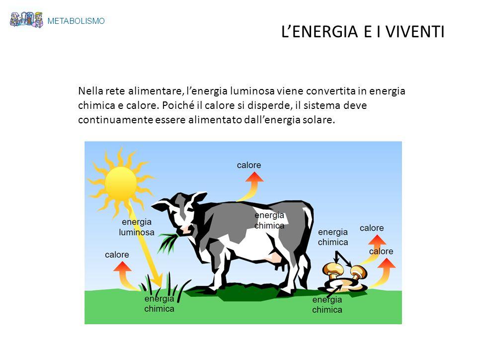 METABOLISMO LENERGIA E I VIVENTI Nella rete alimentare, lenergia luminosa viene convertita in energia chimica e calore. Poiché il calore si disperde,