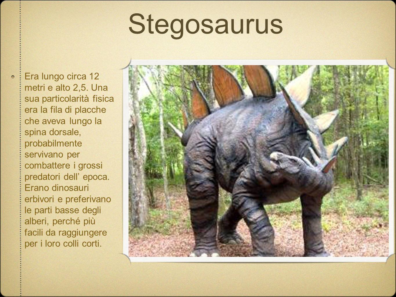Stegosaurus Era lungo circa 12 metri e alto 2,5. Una sua particolarità fisica era la fila di placche che aveva lungo la spina dorsale, probabilmente s