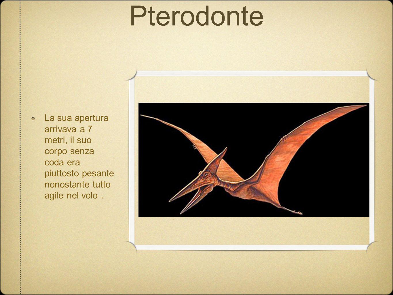 Pterodonte La sua apertura arrivava a 7 metri, il suo corpo senza coda era piuttosto pesante nonostante tutto agile nel volo.